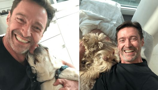 Hugh Jackman And His Dogs Grace The Internet
