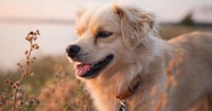 Kind-Hearted Travelers Are Adopting Stray Dogs Abroad