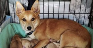 Pregnant Dog Gets New Family, New Job, And A Whole New Life