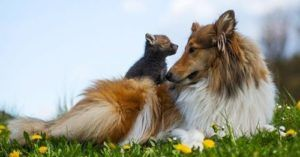 Dog Uses Her Motherly Instincts To Help Rehabilitate Orphaned Wildlife