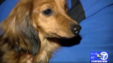 Volunteer Firefighters Free Dog Trapped In Pipe For Nearly 24 Hours