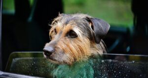 Passerby Smashes Mercedes Window To Rescue Overheating Dog Inside