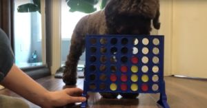 Dog Wins Connect 4 Game Against His Mom