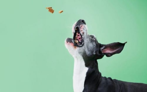 What Dog Treats Should I Avoid For My Dog?