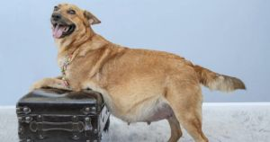 Rescue Takes Glamorous Photos Of Pregnant Dogs To Get Them Adopted