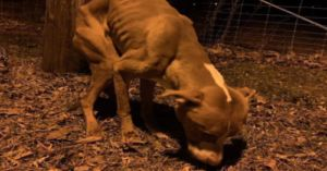 """Malnourished """"Christmas Miracle"""" Dog Given Foster Home For The Holidays"""