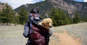 GIVEAWAY TIME! Win A 'Hiking With Dogs' Prize Package!