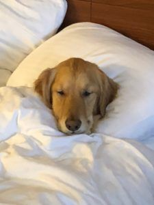 Science Confirms It: Yes Your Dog Should Sleep in Your Bed