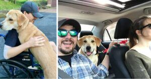 A Skydiving Accident Led This Couple To Their Perfect Rescue Dog