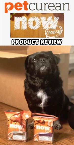 New Petcurean NOW Fresh Stews Product Review