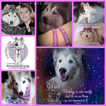 Gibson's 5th Rainbow Bridge Anniversary