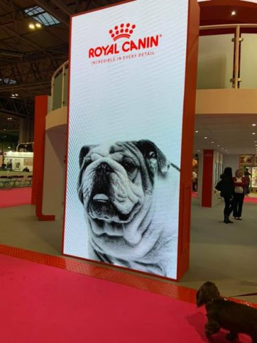 Royal Canin removes Bulldog display at Crufts; Bulldoggers threaten boycott
