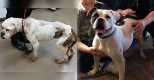 This Dog Suffered Neglect and Abuse, But You Helped Give Her A Better Life