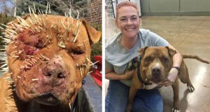 Dog Covered In Porcupine Quills Finds The Happiest Life Ever