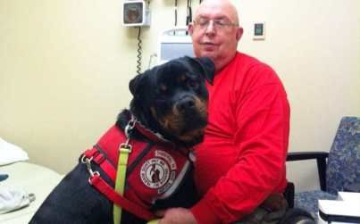5 Interesting Facts About Rottweilers That You Perhaps Don't Know