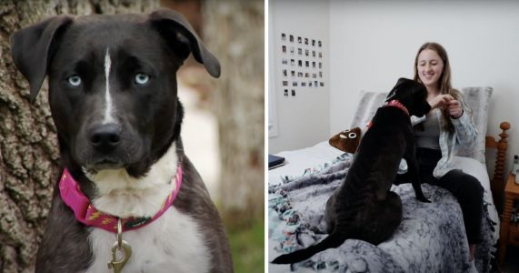 Family Discovers Foster Dog Has Same Rare Heart Condition As Daughter