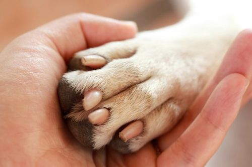 8 Tips for Year-Round Dog Paw Health