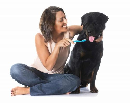 Grooming Your Rottie: Taking Care Of Their Eyes, Ears, And Teeth
