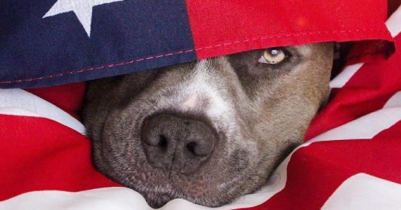 7 Reasons Dogs Would Make The Best Politicians