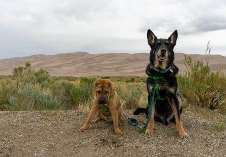 Visiting Great Sand Dunes National Park With Pets