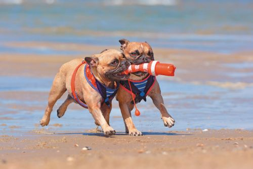 10 Real Weight-Loss Tips for Dogs that Work