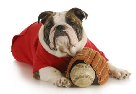 Dog Friendly Baseball Games - 2020 Schedule