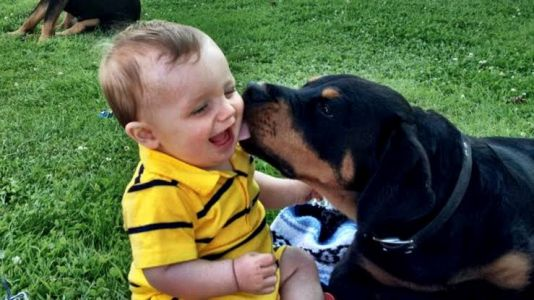 This Is Why You Need A Baby Rottweiler In Your Life?