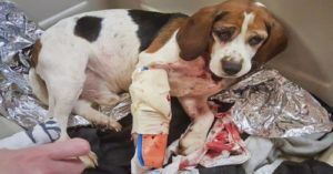 Trucker and State Troopers Save Lives of Dogs Thrown from Car on Interstate