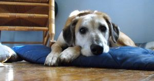 Why Losing A Dog Can Be More Painful Than The Death Of A Family Member
