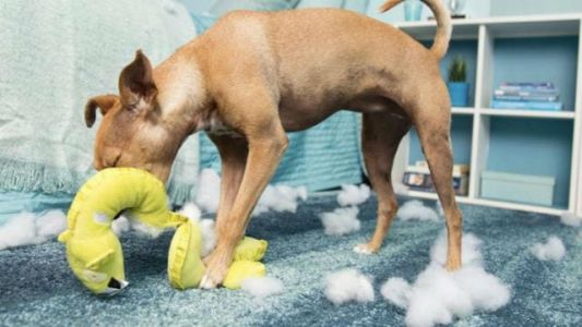 What Are The Best Dog Beds For Chewers?