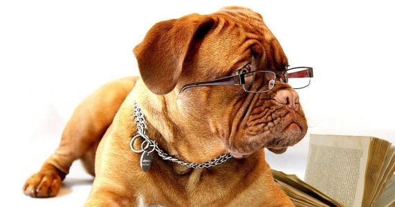 Top 21 Smartest Dog Breeds - Most Intelligent Dogs