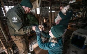 200 Dogs Rescued From South Korean Meat Farm Are On To Better Lives
