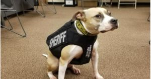 Sheriff's Department Hires Pit Bulls. Rescues Dogs. Saves Thousands