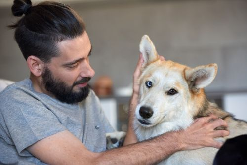 Efficient Natural Flea Treatments for Dogs