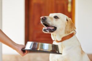 Protect Your Dog And Yourself From This Potentially Deadly Invisible Danger Lurking In Your Home
