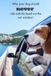 Why Your Dog Should Never Ride with His Head out the Car Window