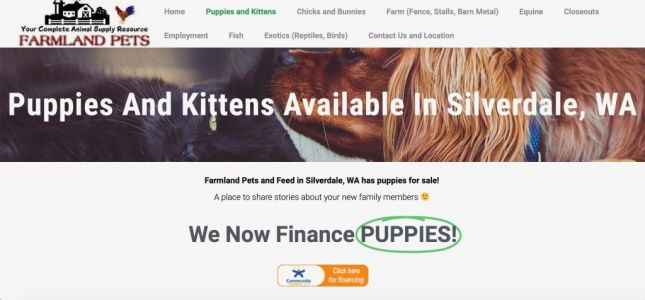 Washington Pet Stores Are Leasing Puppies