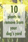 10 Plants to Remove from Your Dog's Yard