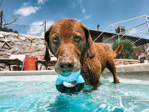 13 Coolest Outdoor Dog Toys Of All Time