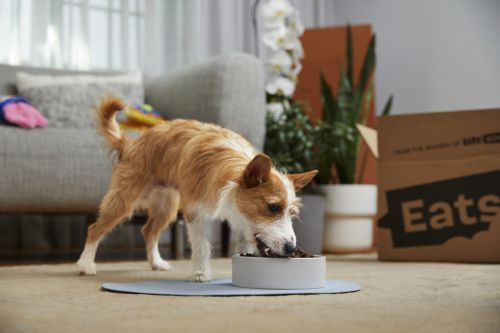 11 Dry Dog Food Brands That Have Never Had A Recall