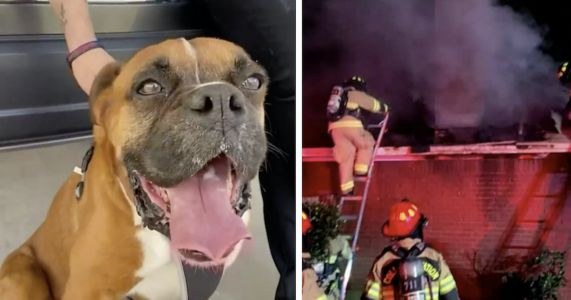 Dog Saves Family From Fire, Then Disappears For Two Months