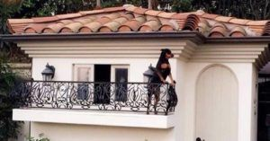 Paris Hilton's Dogs Have Their Own Custom Dog Mansion, Obviously
