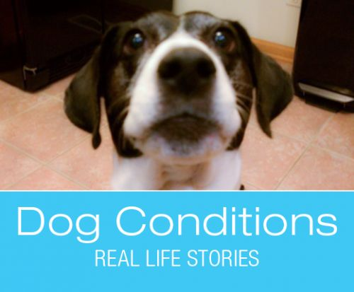 What Would You Do if It Was Your Dog: What Is Wrong with Suki?