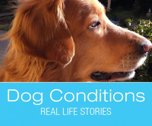 What Would You Do if It Was Your Dog: Viva's Elevated Liver Values