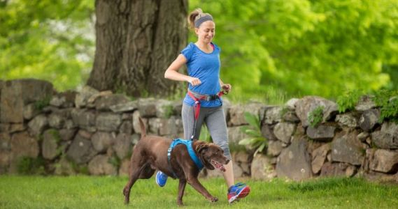 Tips and a Training Plan for Running With Your Dog