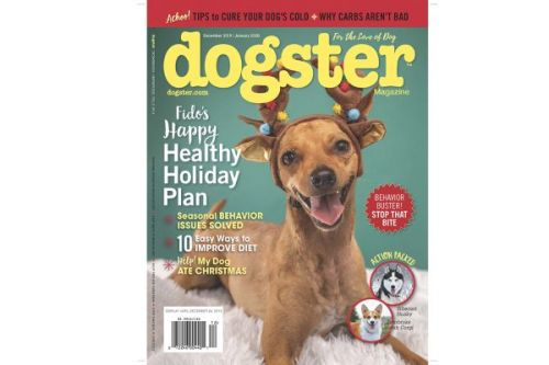 Dug Up at Dogster: November 2019 Dog Events and Premieres