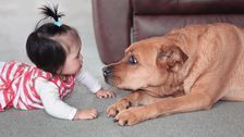 Here's How The Top Pet And Baby Names Compare