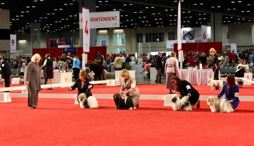 8,600 Things to Love About the AKC National Championship Dog Show