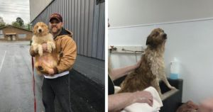 Lost Dog Found 54 Days After Tornado Destroyed Family's Home