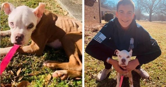 Dog Tossed In Dumpster On Christmas Day Is Adopted By The Officer Who Saved Her